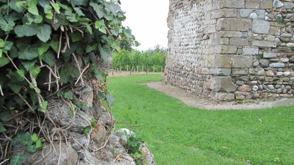 La torre delle Castelle a Gattinara, con le vigne che si estendono sulla collina e, in primo piano, alcuni resti delle antiche costruzioni circostanti